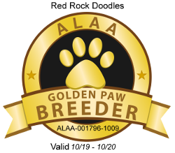 Red Rock Doodles ALAA Golden Paw Breeder